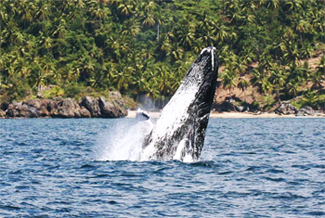 Samana Dominican Republic Tourism Information.
